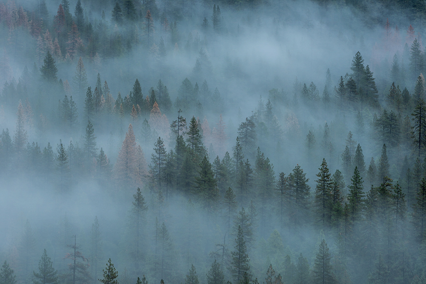 Yosemite National Park Fog Trees Fine Art Landscape Photography Mark Lilly